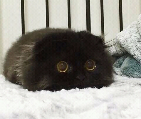 Mitos seputar kucing hitam.