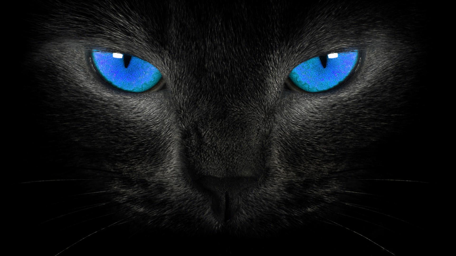 Mitos Seputar Kucing Hitam Di Berbagai Negara