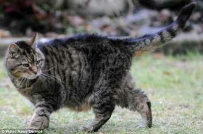 Lucy, Kucing tertua di dunia yang diyakini berusia 39 tahun.