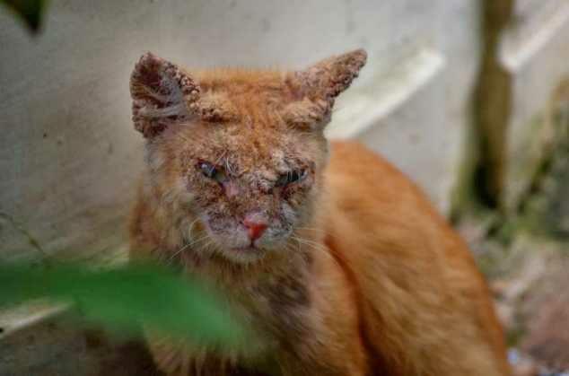 Scabies Serem Ngga Siih Kucing Lucu Net