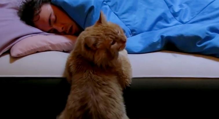 Pernah kepikiran kenapa kucing aktif saat malam hari ?. Ini alasannya.