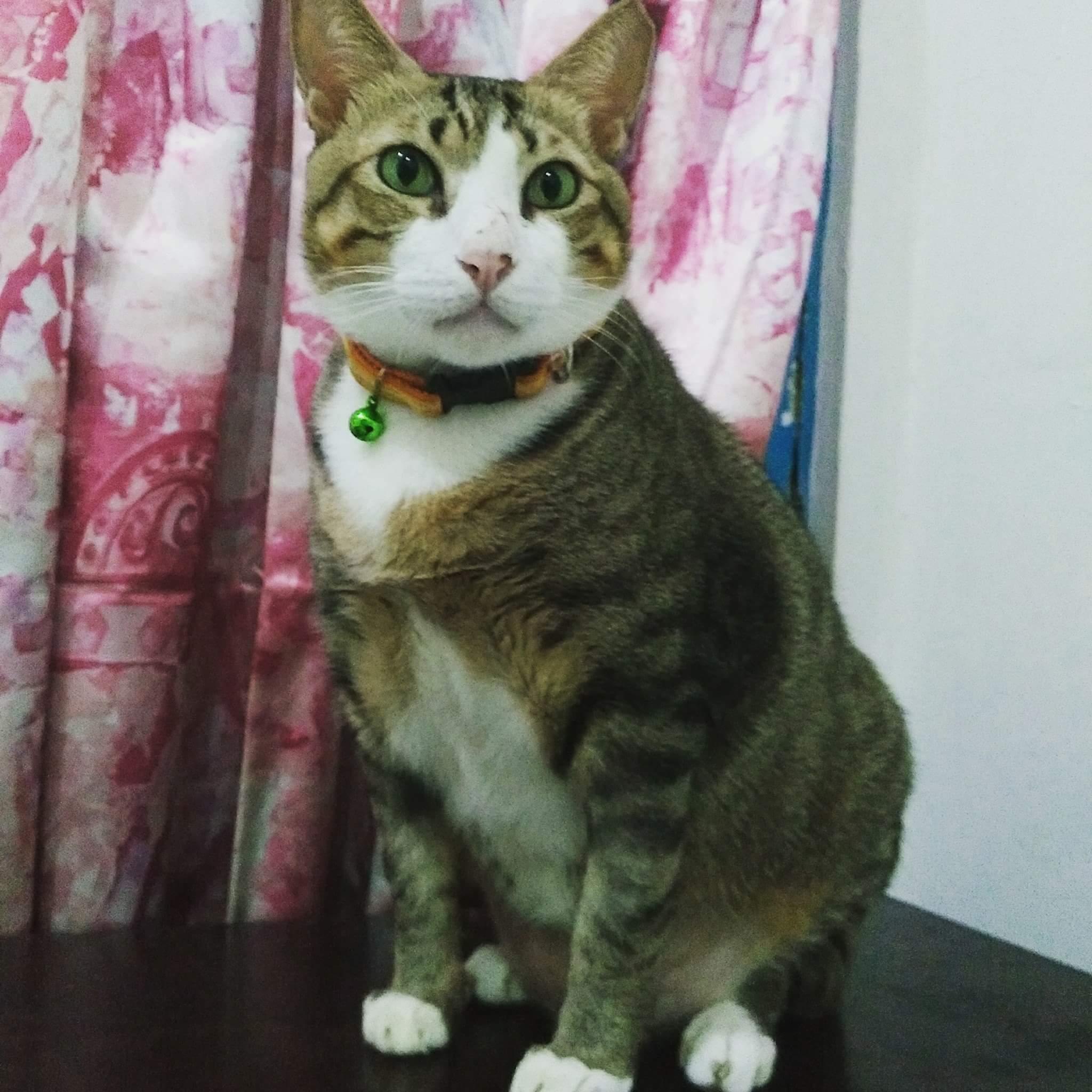 18839463 810802129076607 1724909132545648997 o.jpg - Bagaimana Cara Membuat Kucing Gemuk?