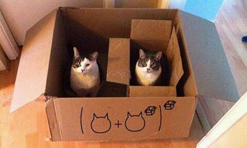Kotak atau kardus merupakan tempat favorit kucing. alasannya ?