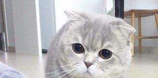 "Alasan kucing menengok ketika dipanggil ""puss""."