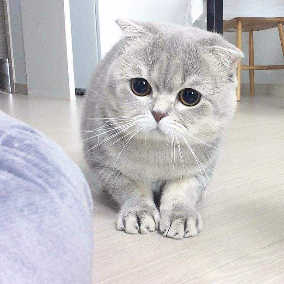 """20161015074914 - Alasan Kucing Menengok ketika Dipanggil """"Pus"""""""