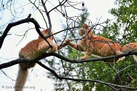 FB IMG 14548694361991137 - Kucing Jantan VS Kucing Betina, Anda Pilih yang Mana ?