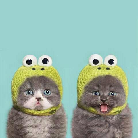 Kucing Jantan Vs Kucing Betina Anda Pilih Yang Mana Kucing Lucu Net