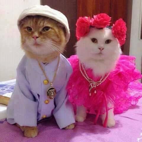 FB IMG 14585332822644253 - Kucing Jantan VS Kucing Betina, Anda Pilih yang Mana ?
