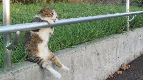 Download 93+  Gambar Kucing Lucu Lg Galau Paling Baru