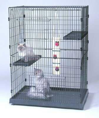 kucing dalam kandang