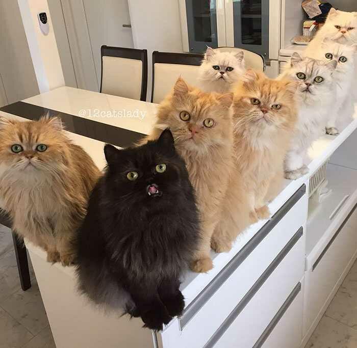 20161001164805 - Yuk Mencoba Resep Wet Food Sehat untuk si Kucing