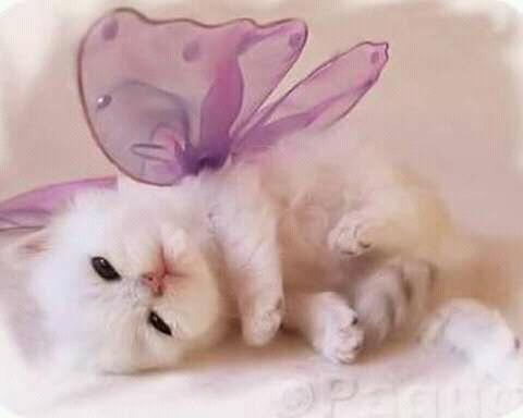 FB IMG 14554997562389706 - Bisakah Kucing Kesayangan Kita Bermimpi?