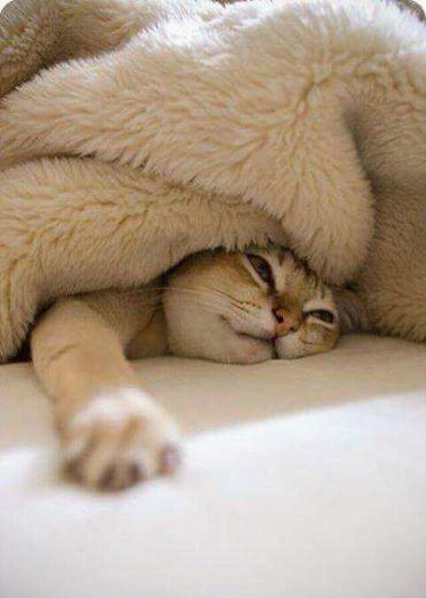FB IMG 14557484011116114 - Bisakah Kucing Kesayangan Kita Bermimpi?