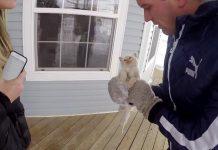 Gambar : Love Meow.