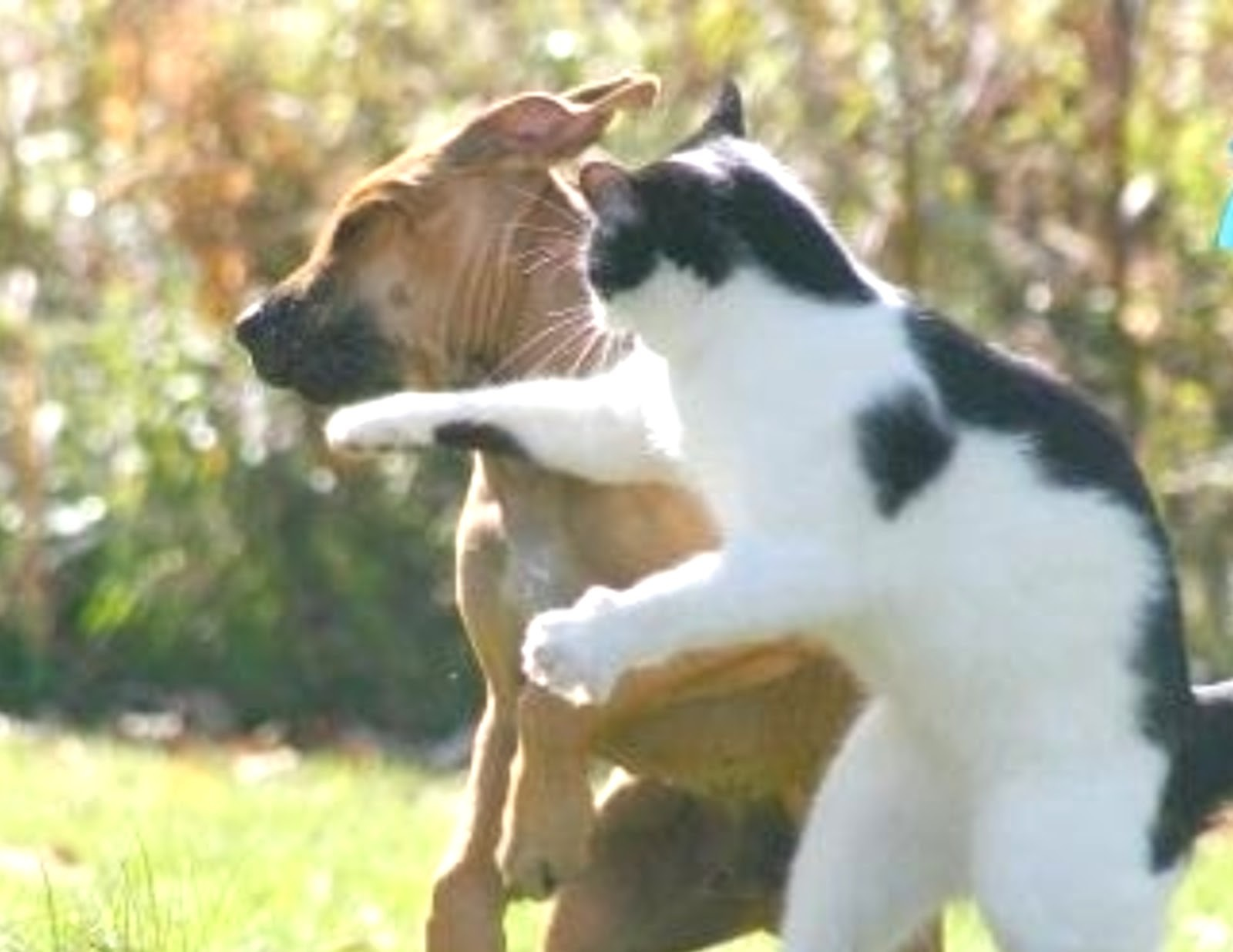 Cats In A Dog Fight