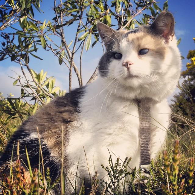 Stevie kucing buta sangat mengagumkan - Beranda
