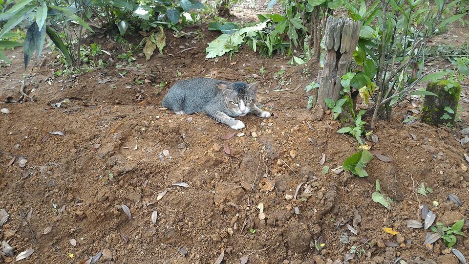 kucing dibawa pulang menolak - Beranda
