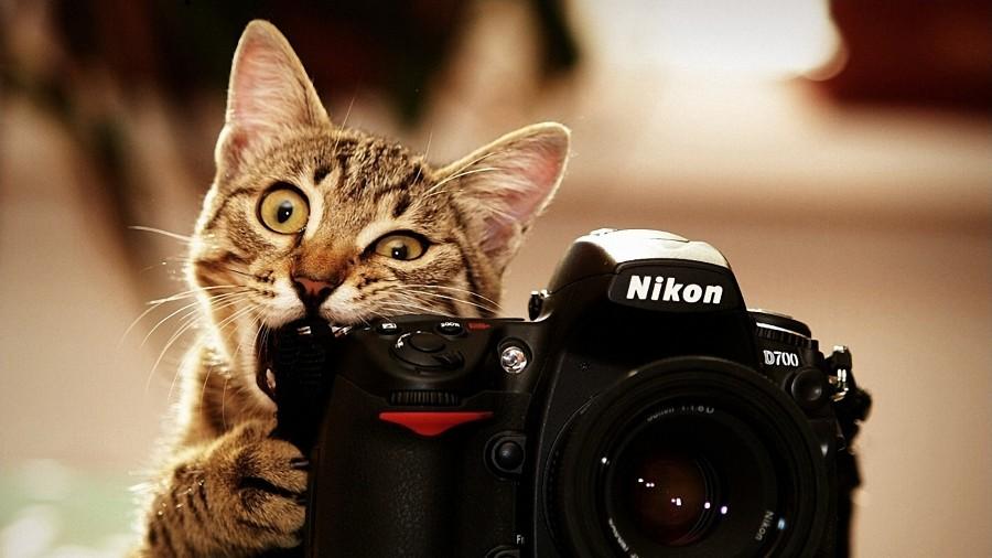 cara memotret kucing dengan hasil yang menarik