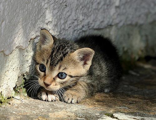 Kisah kitten: Ibuku yang baru.