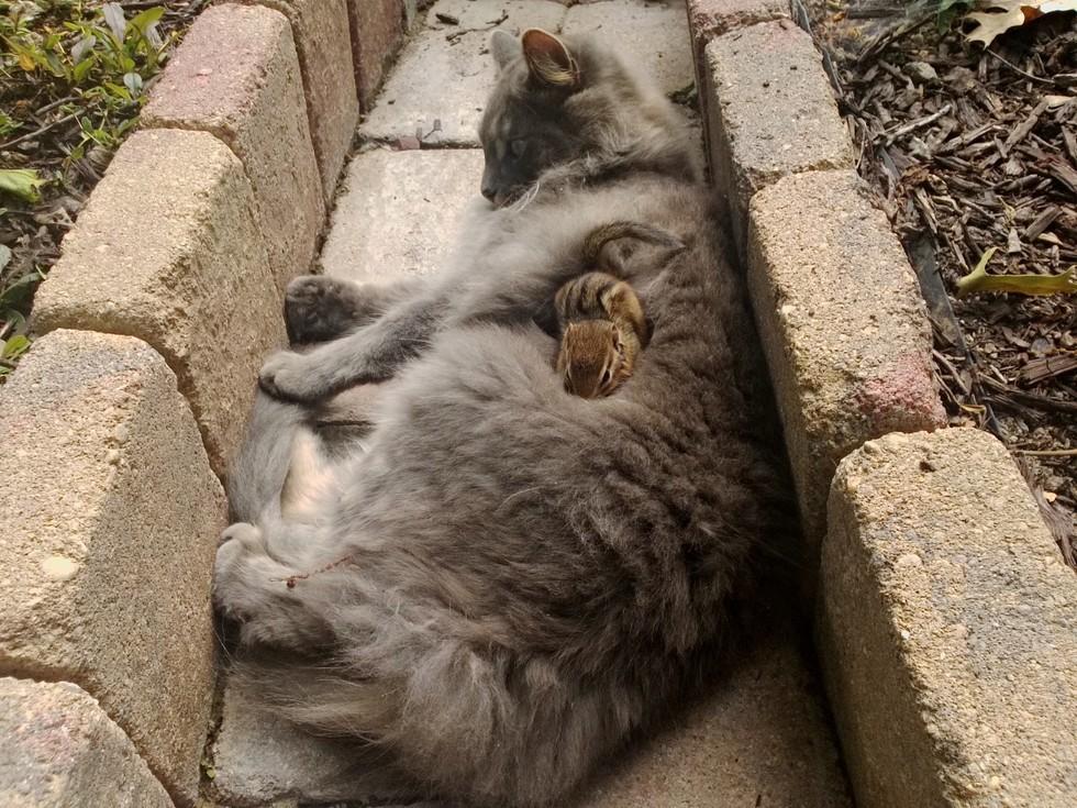 kucing dan tupai