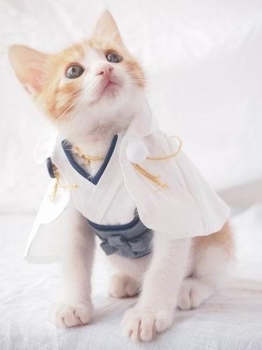 Si kucing cocok banget ya kalau dibuatin kostum karakter anime favorit kamu. Gemesnya double !.