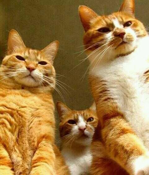 kucing makhluk yang egois. benar atau tidak?