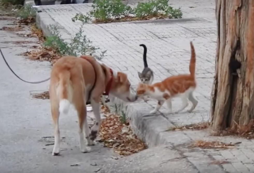 meli, anjing bak hati yang setiap harinya memberi makan kucing-kucing liar. gambar: Lovemeow