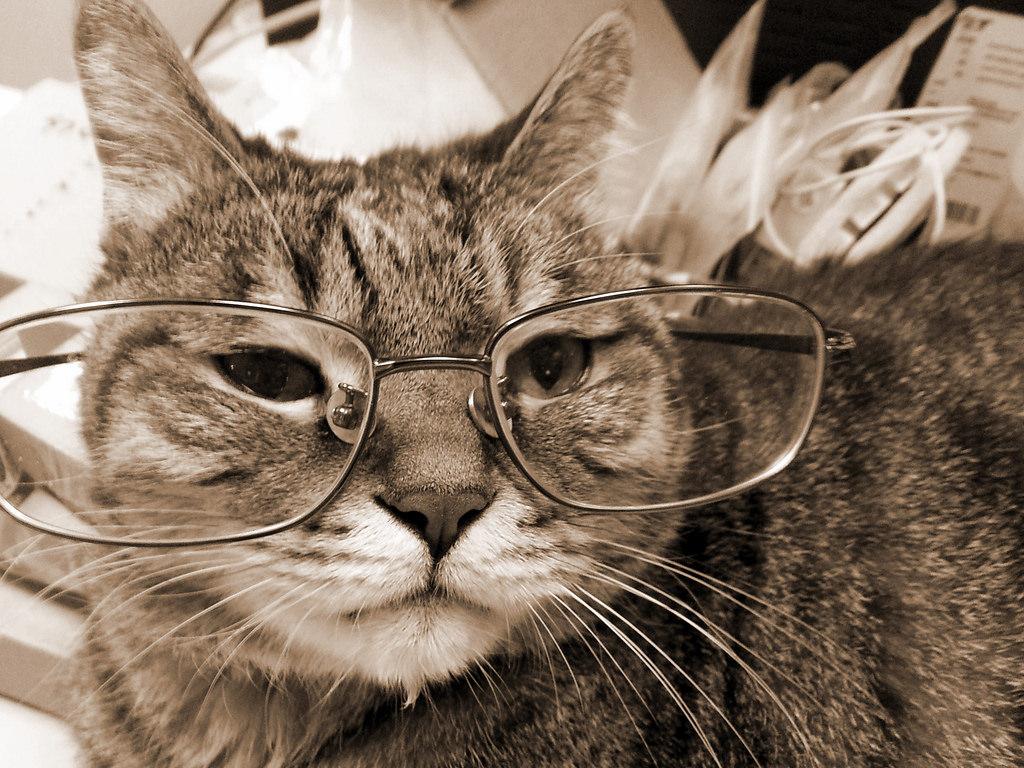 Kucing tua ebih sering bermalas-malasan, tidak aktif dan sulit melakukan aktifitas.