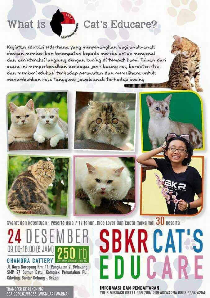 Liburan pintar bersama SBKR Cat's Educare 2016.