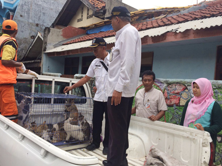 40 kucing liar yang terazia akan dibawa ke rumah observasi Ragunan. Gambar: beritajakarta.com