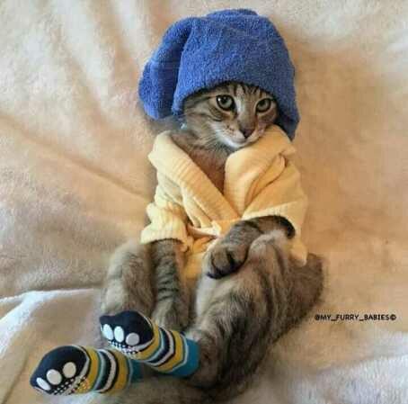 Pastikan saat di mandikan bulu kucing benar benar kering.