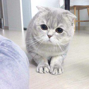 20161015074914 300x300 - Peka Dong Peka ! 10 Suara Hati Kucing yang Dia Ingin Pemiliknya Tahu