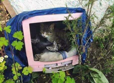 rumah berteduh untuk kucing jalanan.