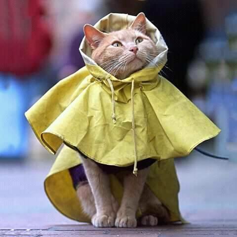 Waspada, saat musim hujan kucing rentan terrkena penyakit.