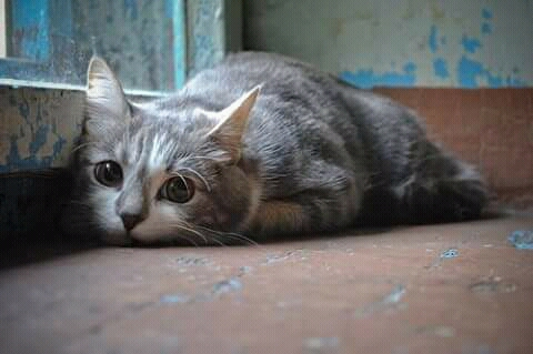 FB IMG 14561128207347788 - Hati-hati ! Penyakit Berikut Mengintai Kesehatan Kucing Anda Di Musim Penghujan