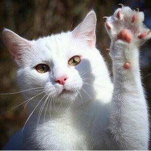 FB IMG 14603191271067092 300x300 - Peka Dong Peka ! 10 Suara Hati Kucing yang Dia Ingin Pemiliknya Tahu
