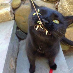 FB IMG 14606338530517169 300x300 - Peka Dong Peka ! 10 Suara Hati Kucing yang Dia Ingin Pemiliknya Tahu
