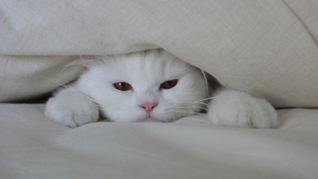 butuh kehangatan 1024x576 - Hati-hati ! Penyakit Berikut Mengintai Kesehatan Kucing Anda Di Musim Penghujan
