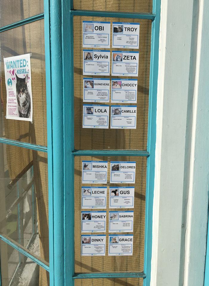 Cara unik relawan Los Angeles bantu pusat adopsi kucing jalanan. Gambar: Boredpanda