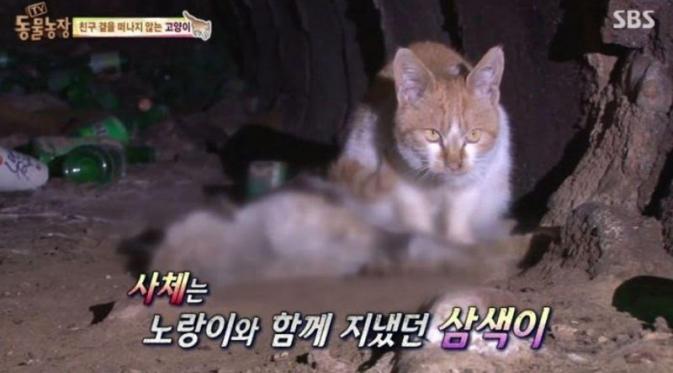 kucing juga punya perasaan: kucing ini tunggui saudaranya yang meninggal