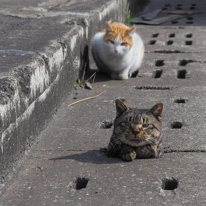 Lubang selokan menjadi tempat bermain kucing kucing liar berikut.