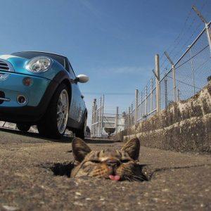 nyan kichi3 300x300 - Lihat Bagaimana Kucing-Kucing Liar ini Asik Bermain Di Lubang Selokan