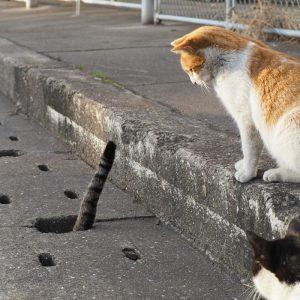 nyan kichi4 300x300 - Lihat Bagaimana Kucing-Kucing Liar ini Asik Bermain Di Lubang Selokan