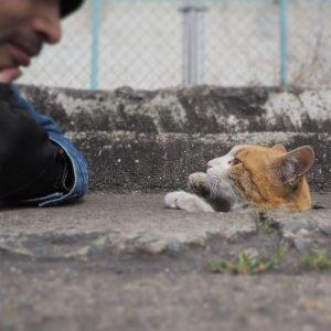 nyan kichi6 300x300 - Lihat Bagaimana Kucing-Kucing Liar ini Asik Bermain Di Lubang Selokan
