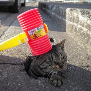 nyan kichi7 300x300 - Lihat Bagaimana Kucing-Kucing Liar ini Asik Bermain Di Lubang Selokan