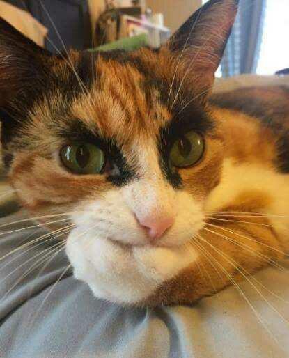 20161021183023 - Pernah Dipijat Kucing ?. Ini 5 Alasan Kenapa Kucing Suka Memijat