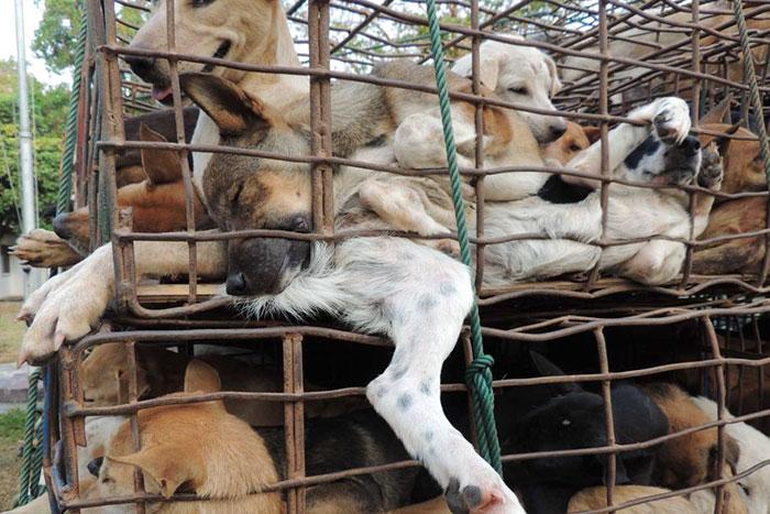 22 - Konsumsi Daging Kucing dan Anjing Kini Dilarang Di Taiwan