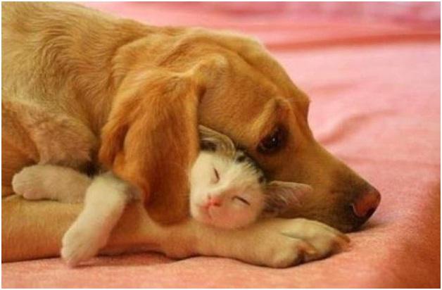 6 jpeg07e1916c6f2db8bedc1d4b2f505125b1 - Konsumsi Daging Kucing dan Anjing Kini Dilarang Di Taiwan