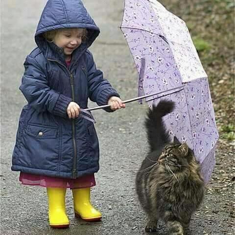 FB IMG 14538195008264336 - Saat Keluarga Melarang untuk Memelihara Kucing. Apa yang Sebaiknya Anda Lakukan ?