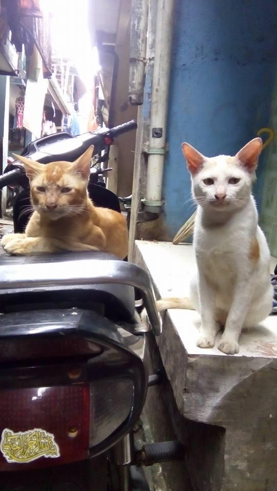 Tolly3 - Transformasi Tolly, Kucing yang Terjebak Diatas Gerbang Tol Pedati